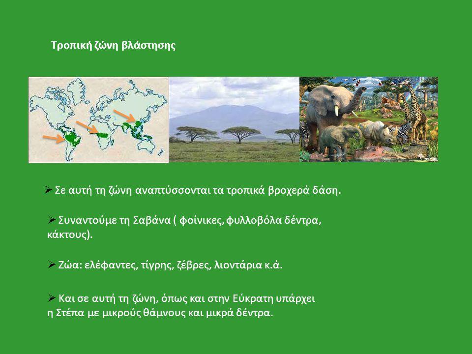 Τροπική ζώνη βλάστησης  Σε αυτή τη ζώνη αναπτύσσονται τα τροπικά βροχερά δάση.  Συναντούμε τη Σαβάνα ( φοίνικες, φυλλοβόλα δέντρα, κάκτους).  Ζώα: