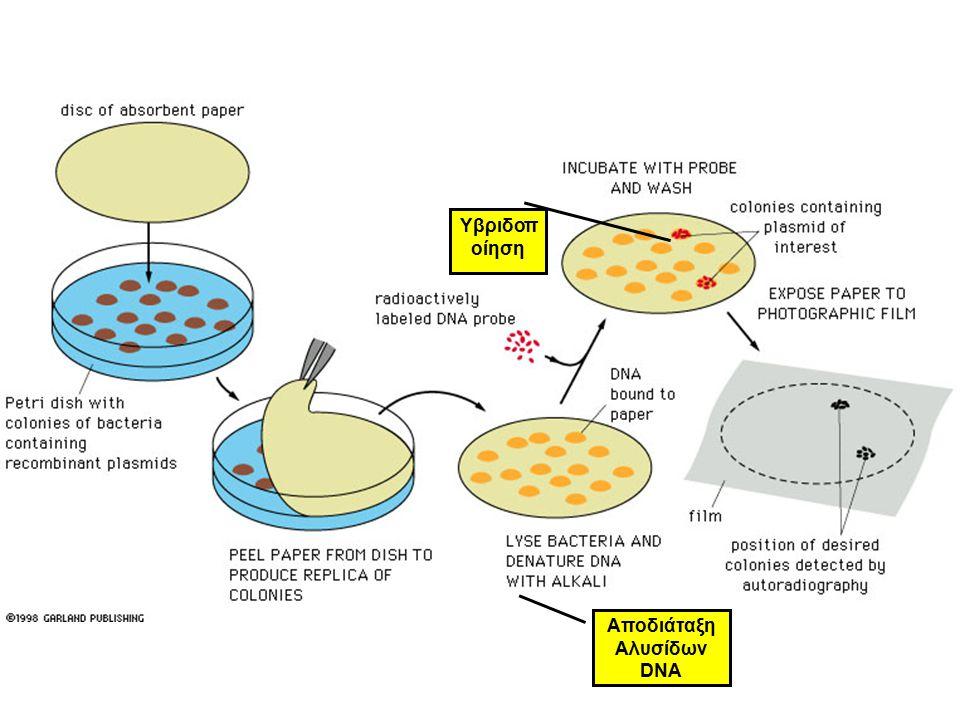 Αποδιάταξη Αλυσίδων DNA Υβριδοπ οίηση