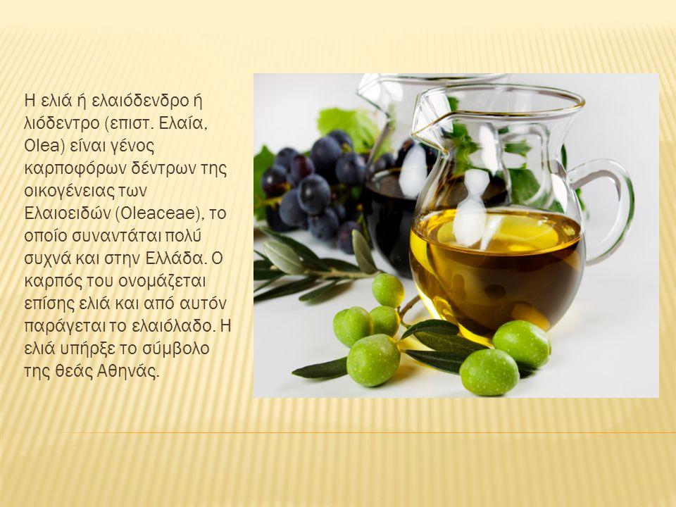 Η ελιά ή ελαιόδενδρο ή λιόδεντρο (επιστ. Ελαία, Olea) είναι γένος καρποφόρων δέντρων της οικογένειας των Ελαιοειδών (Oleaceae), το οποίο συναντάται πο