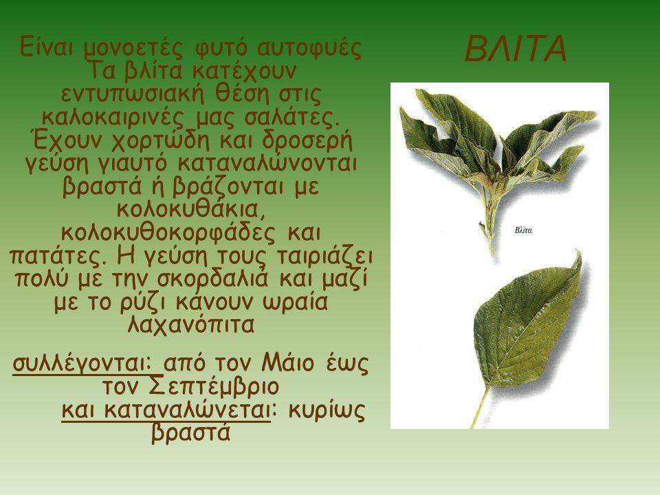 ΒΛΙΤΑ Είναι μονοετές φυτό αυτοφυές Τα βλίτα κατέχουν εντυπωσιακή θέση στις καλοκαιρινές μας σαλάτες. Έχουν χορτώδη και δροσερή γεύση γιαυτό καταναλώνο