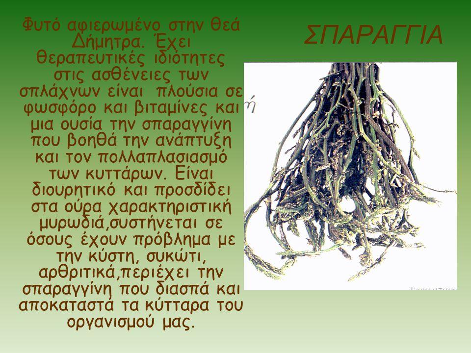 ΣΠΑΡΑΓΓΙΑ Φυτό αφιερωμένο στην θεά Δήμητρα. Έχει θεραπευτικές ιδιότητες στις ασθένειες των σπλάχνων είναι πλούσια σε φωσφόρο και βιταμίνες και μια ουσ