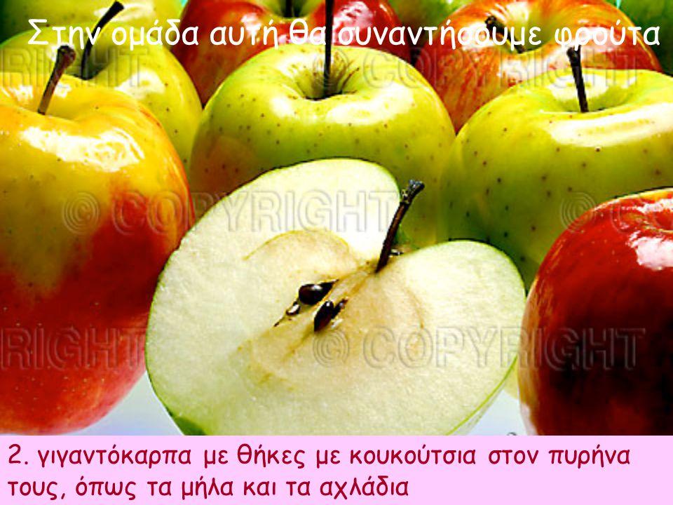 Στην ομάδα αυτή θα συναντήσουμε φρούτα 2. γιγαντόκαρπα με θήκες με κουκούτσια στον πυρήνα τους, όπως τα μήλα και τα αχλάδια