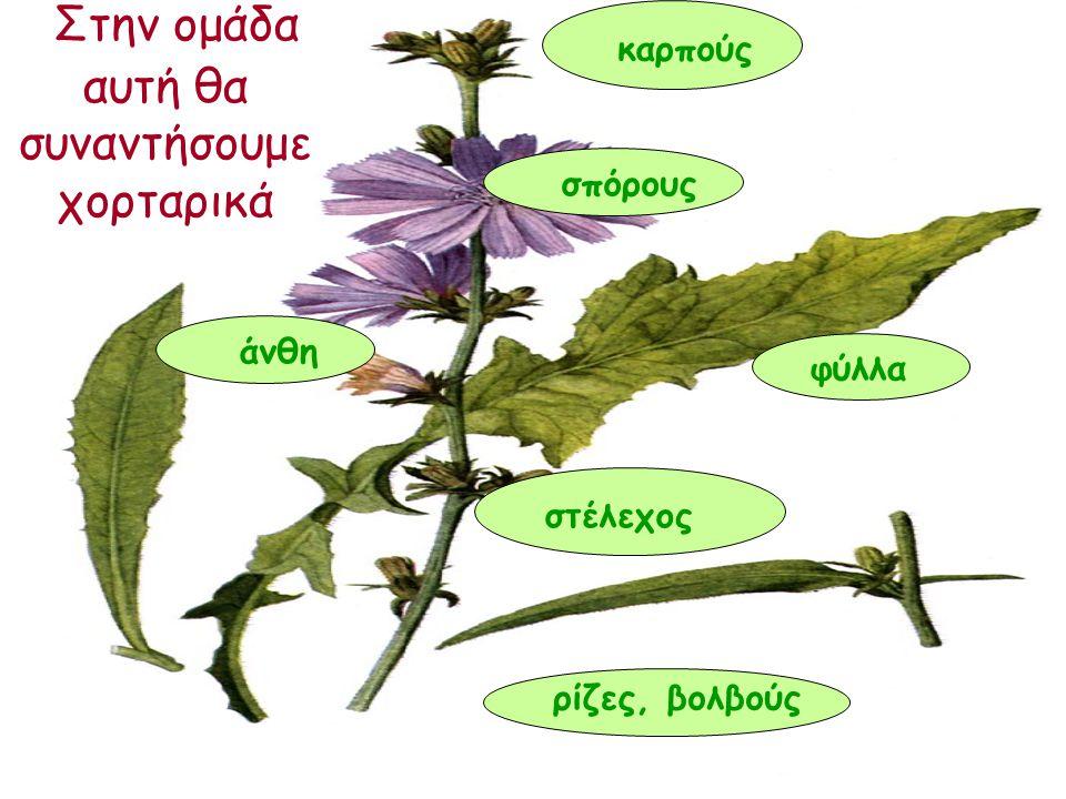Στην ομάδα αυτή θα συναντήσουμε χορταρικά ρίζες, βολβούς στέλεχος φύλλα άνθη σπόρους καρπούς