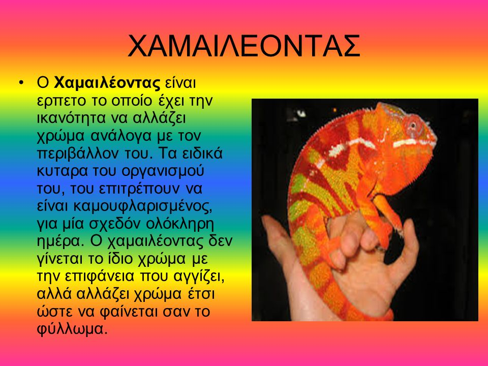 ΧΑΜΑΙΛΕΟΝΤΑΣ Ο Χαμαιλέοντας είναι ερπετο το οποίο έχει την ικανότητα να αλλάζει χρώμα ανάλογα με τον περιβάλλον του. Τα ειδικά κυταρα του οργανισμού τ