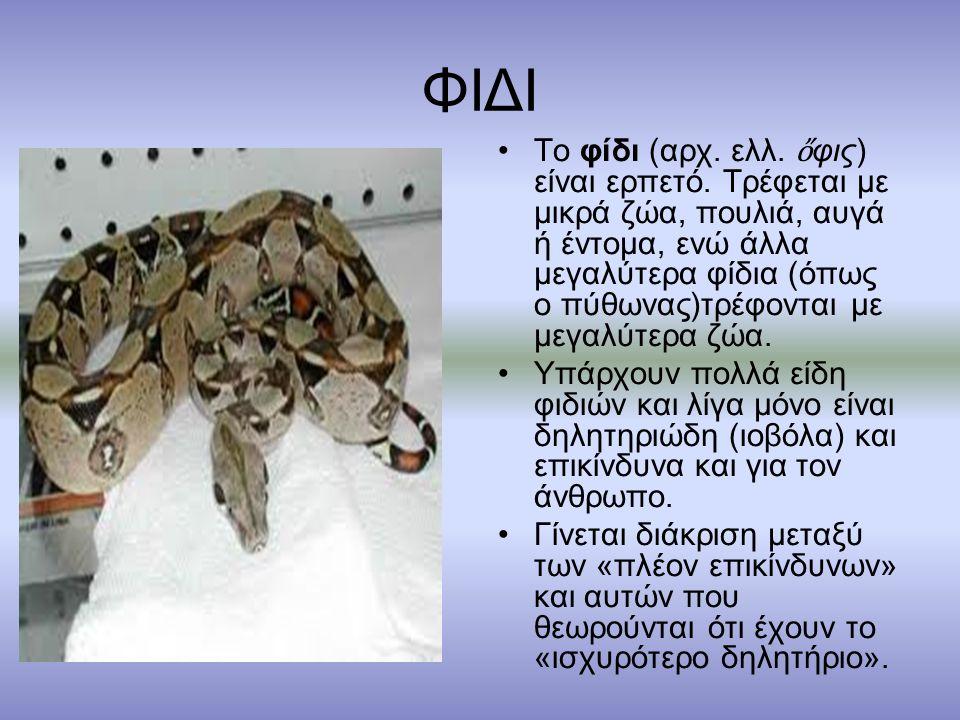 ΦΙΔΙ Το φίδι (αρχ.ελλ. ὄ φις) είναι ερπετό.