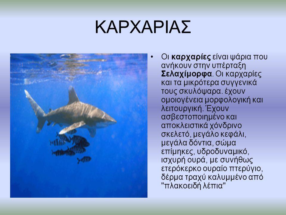 ΚΑΡΧΑΡΙΑΣ Οι καρχαρίες είναι ψάρια που ανήκουν στην υπέρταξη Σελαχίμορφα. Οι καρχαρίες και τα μικρότερα συγγενικά τους σκυλόψαρα. έχουν ομοιογένεια μο