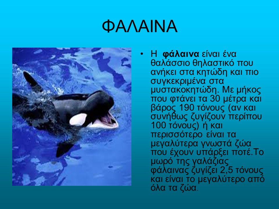 ΦΑΛΑΙΝΑ Η φάλαινα είναι ένα θαλάσσιο θηλαστικό που ανήκει στα κητώδη και πιο συγκεκριμένα στα μυστακοκητώδη. Με μήκος που φτάνει τα 30 μέτρα και βάρος