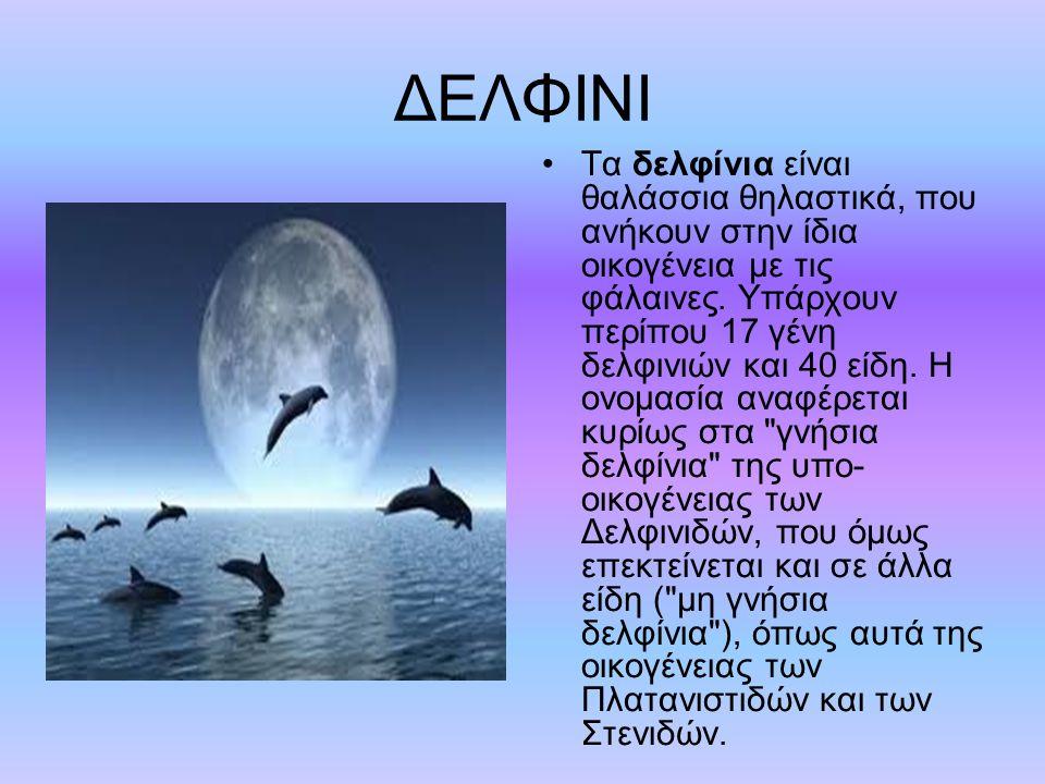 ΔΕΛΦΙΝΙ Τα δελφίνια είναι θαλάσσια θηλαστικά, που ανήκουν στην ίδια οικογένεια με τις φάλαινες.
