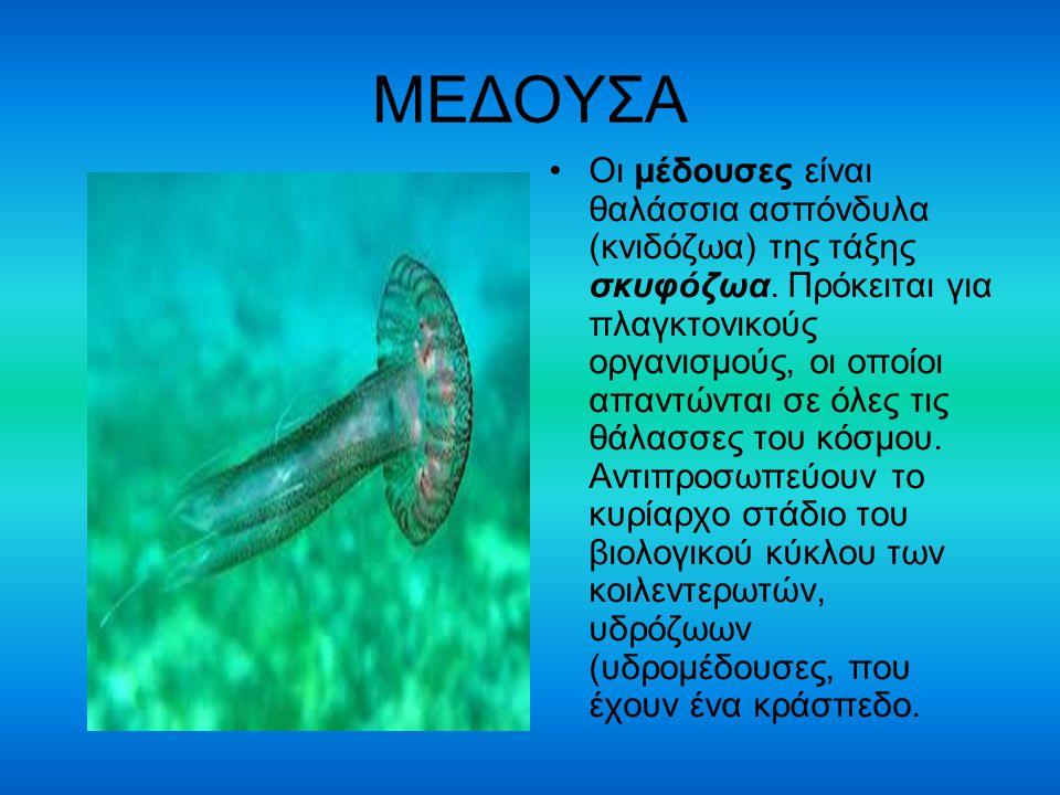 ΜΕΔΟΥΣΑ Οι μέδουσες είναι θαλάσσια ασπόνδυλα (κνιδόζωα) της τάξης σκυφόζωα. Πρόκειται για πλαγκτονικούς οργανισμούς, οι οποίοι απαντώνται σε όλες τις