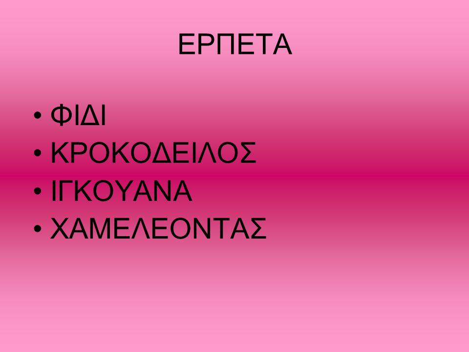 ΕΡΠΕΤΑ ΦΙΔΙ ΚΡΟΚΟΔΕΙΛΟΣ ΙΓΚΟΥΑΝΑ XΑΜΕΛΕΟΝΤΑΣ