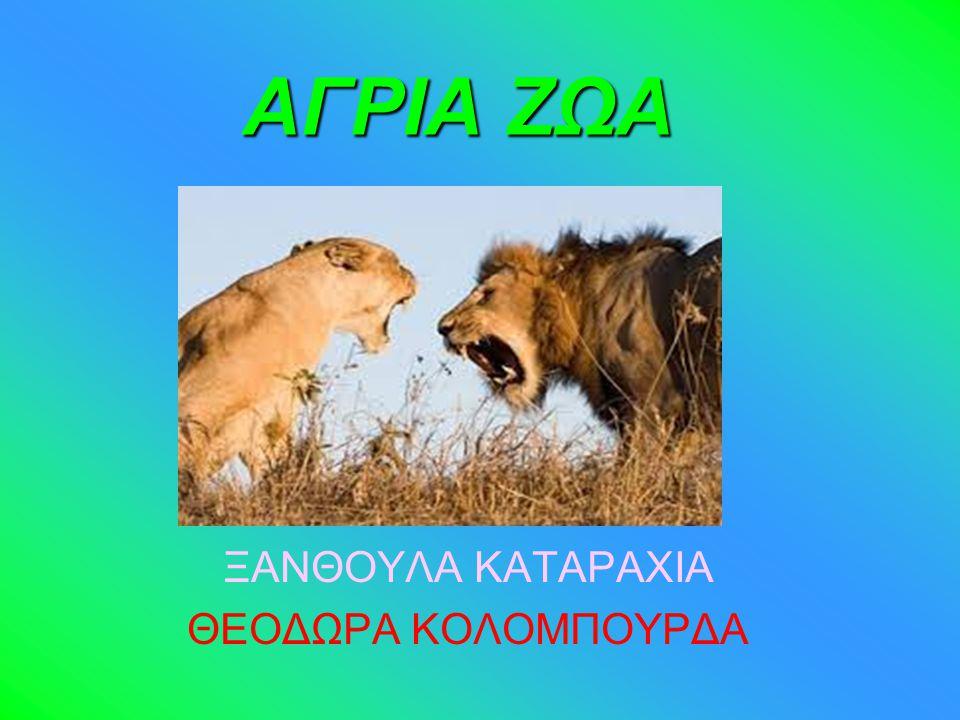 ΤΕΤΡΑΠΟΔΑ Ο Λύκος είναι θηλαστικό της τάξης των Σαρκοφάγων.