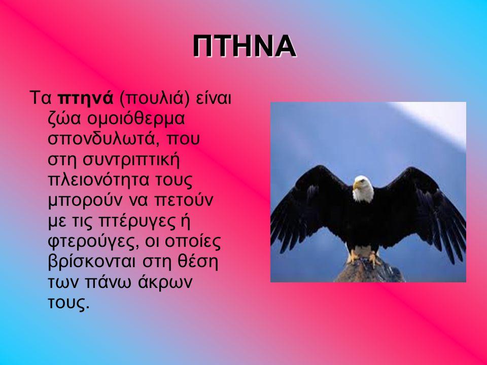 ΓΥΠΑΣ Γύπας είναι η κοινή ονομασία Ιερακόμορφων Πτηνών.
