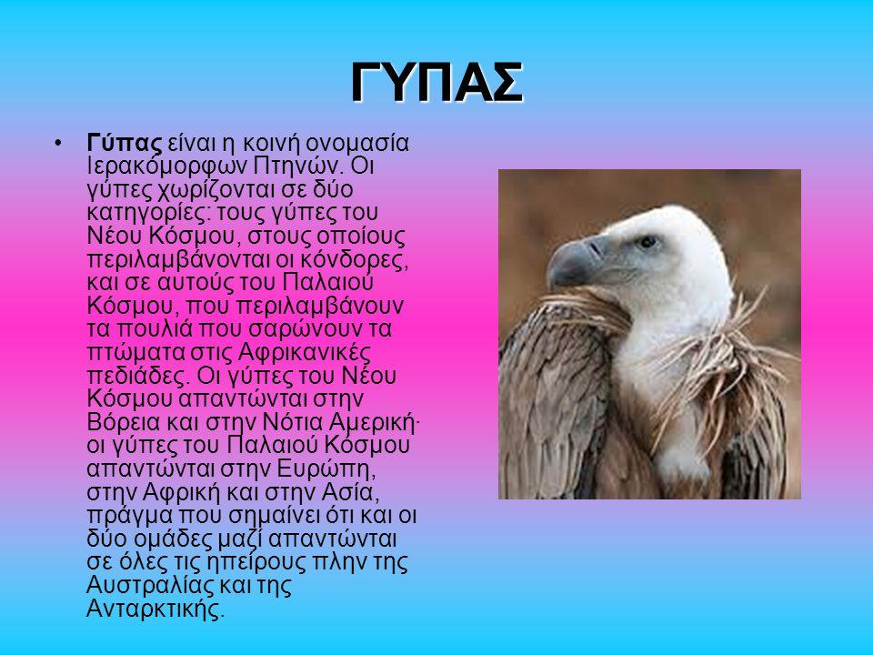 ΠΑΠΑΓΑΛΟΣ Με το όνομα παπαγάλος είναι γνωστά διάφορα είδη από δενδρόβια, ως επί το πλείστον, πουλιά που σχηματίζουν τη τάξη των Ψιττακόμορφων (Psittaciformes), η οποία χωρίζεται σε 3 οικογένειες: Κακατουίδες (Cacatuidae), Ψιττακίδες (Psittacidae) και Γλαυκοπίδες (Strigopidae).