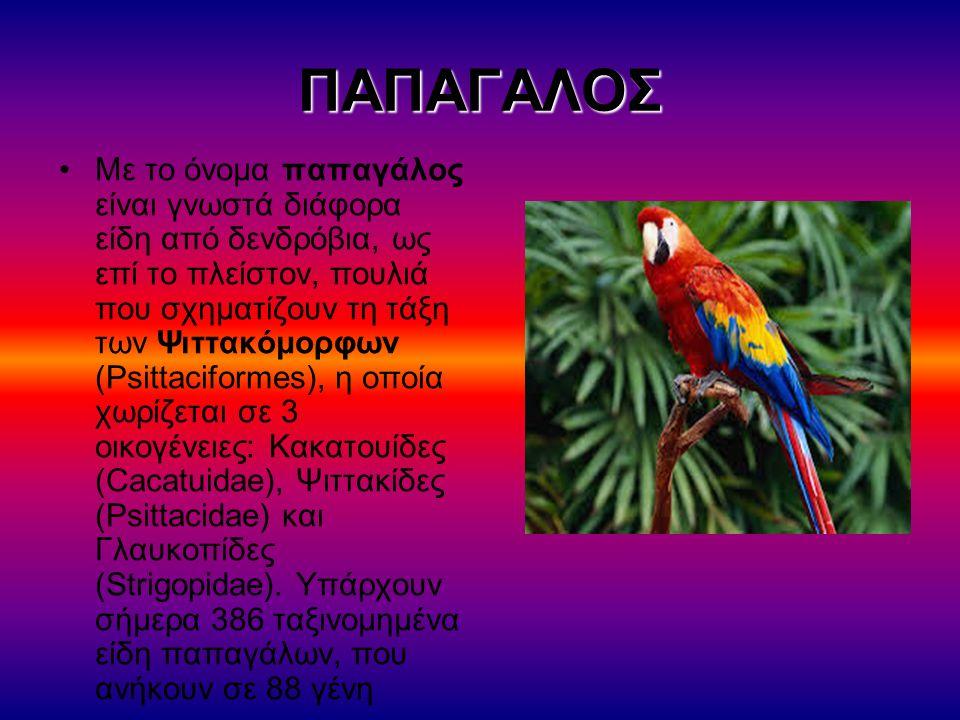 ΠΑΠΑΓΑΛΟΣ Με το όνομα παπαγάλος είναι γνωστά διάφορα είδη από δενδρόβια, ως επί το πλείστον, πουλιά που σχηματίζουν τη τάξη των Ψιττακόμορφων (Psittac