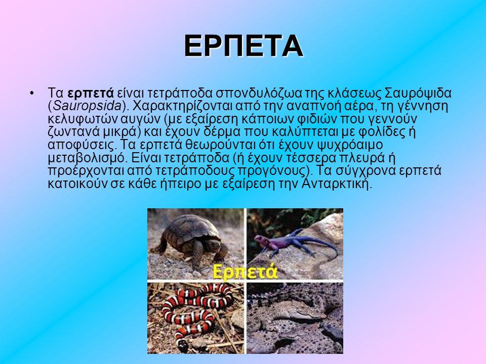 ΧΕΛΩΝΑ Η χελώνα (λατ.Testudo) είναι ερπετό.