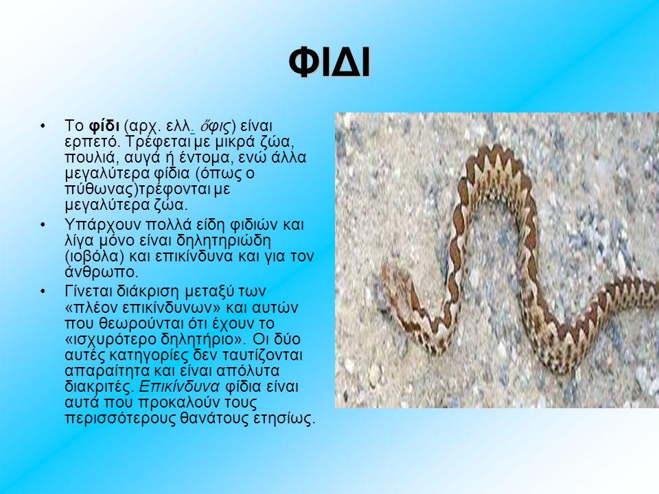 ΦΙΔΙ Το φίδι (αρχ. ελλ. ὄ φις) είναι ερπετό. Τρέφεται με μικρά ζώα, πουλιά, αυγά ή έντομα, ενώ άλλα μεγαλύτερα φίδια (όπως ο πύθωνας)τρέφονται με μεγα