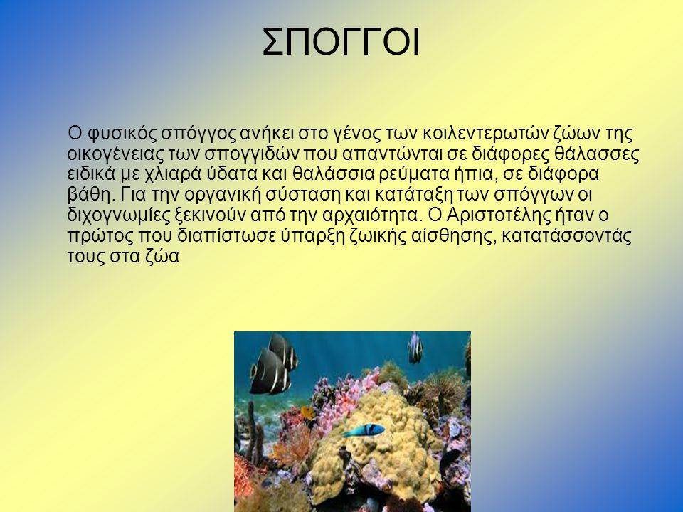 ΣΠΟΓΓΟΙ Ο φυσικός σπόγγος ανήκει στο γένος των κοιλεντερωτών ζώων της οικογένειας των σπογγιδών που απαντώνται σε διάφορες θάλασσες ειδικά με χλιαρά ύ