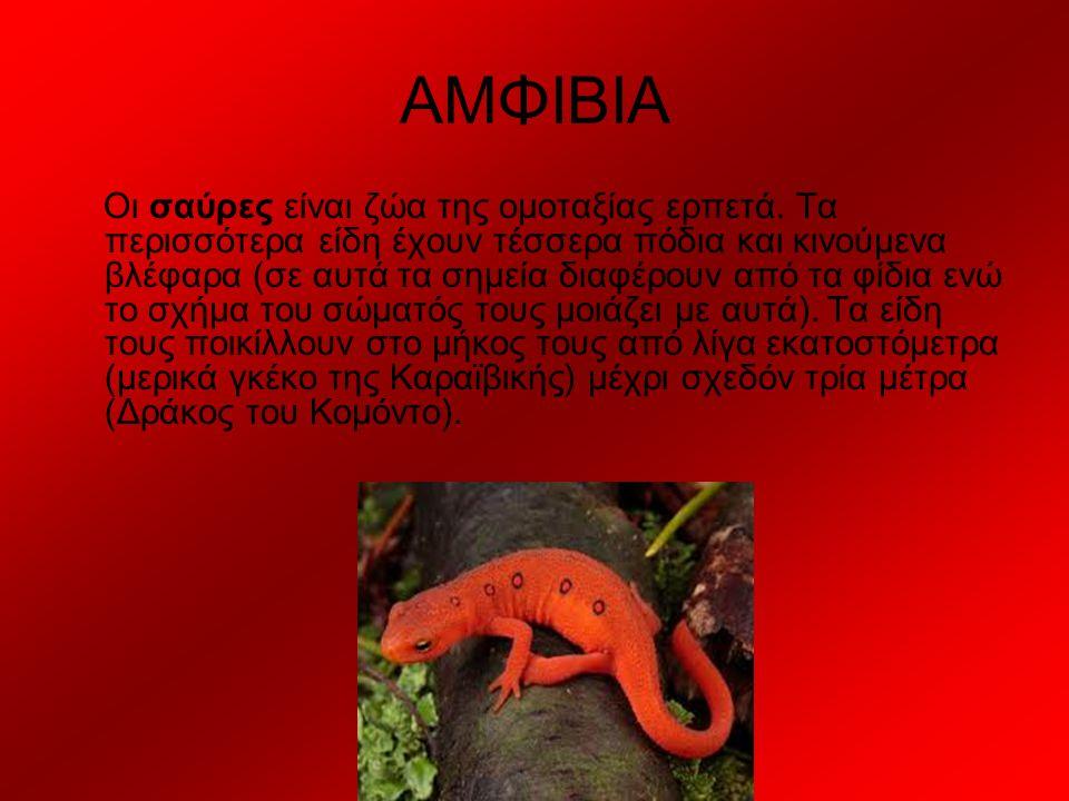 ΑΜΦΙΒΙΑ Οι σαύρες είναι ζώα της ομοταξίας ερπετά. Τα περισσότερα είδη έχουν τέσσερα πόδια και κινούμενα βλέφαρα (σε αυτά τα σημεία διαφέρουν από τα φί