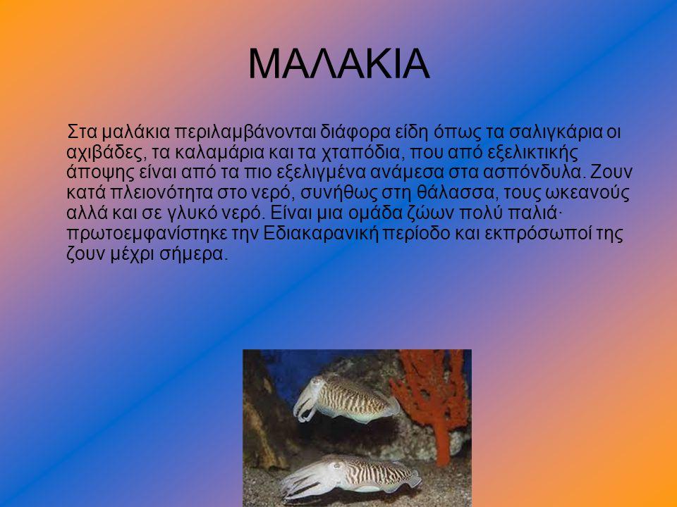 ΜΑΛΑΚΙΑ Στα μαλάκια περιλαμβάνονται διάφορα είδη όπως τα σαλιγκάρια οι αχιβάδες, τα καλαμάρια και τα χταπόδια, που από εξελικτικής άποψης είναι από τα