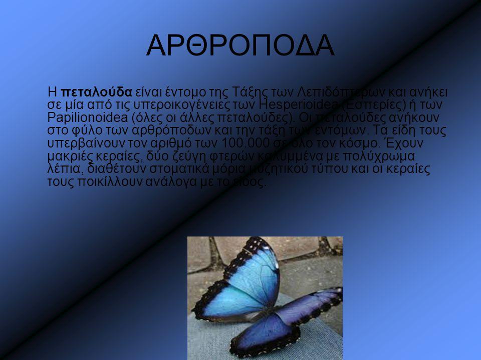 ΑΡΘΡΟΠΟΔΑ Η πεταλούδα είναι έντομο της Τάξης των Λεπιδόπτερων και ανήκει σε μία από τις υπεροικογένειες των Hesperioidea (Εσπερίες) ή των Papilionoide