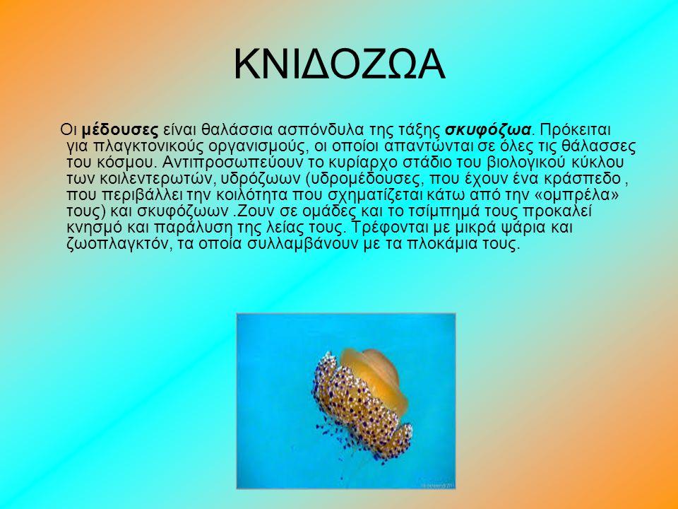 ΚΝΙΔΟΖΩΑ Οι μέδουσες είναι θαλάσσια ασπόνδυλα της τάξης σκυφόζωα. Πρόκειται για πλαγκτονικούς οργανισμούς, οι οποίοι απαντώνται σε όλες τις θάλασσες τ