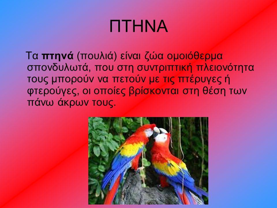ΠΤΗΝΑ Τα πτηνά (πουλιά) είναι ζώα ομοιόθερμα σπονδυλωτά, που στη συντριπτική πλειονότητα τους μπορούν να πετούν με τις πτέρυγες ή φτερούγες, οι οποίες