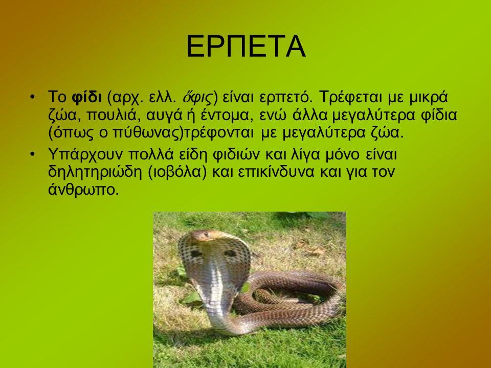 ΕΡΠΕΤΑ Το φίδι (αρχ. ελλ. ὄ φις) είναι ερπετό. Τρέφεται με μικρά ζώα, πουλιά, αυγά ή έντομα, ενώ άλλα μεγαλύτερα φίδια (όπως ο πύθωνας)τρέφονται με με