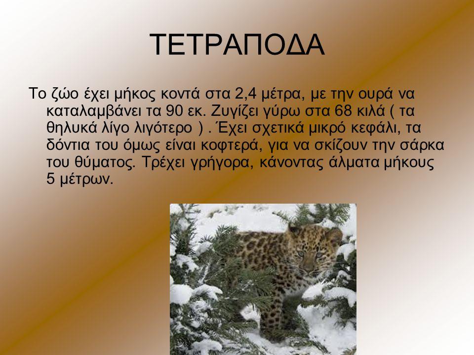 ΤΕΤΡΑΠΟΔΑ Το ζώο έχει μήκος κοντά στα 2,4 μέτρα, με την ουρά να καταλαμβάνει τα 90 εκ. Ζυγίζει γύρω στα 68 κιλά ( τα θηλυκά λίγο λιγότερο ). Έχει σχετ