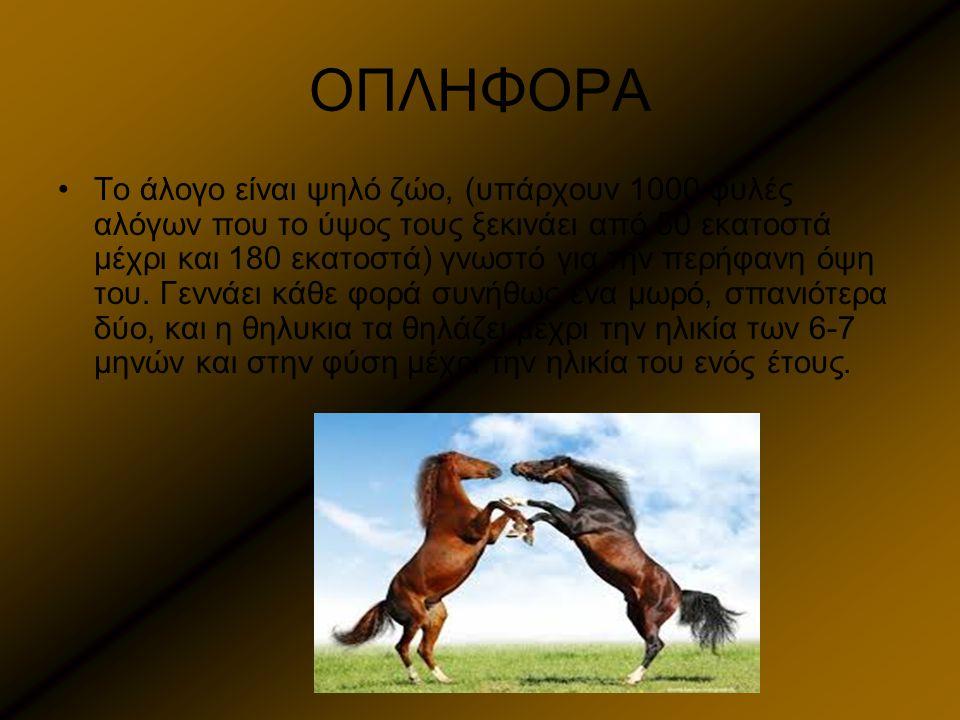 ΟΠΛΗΦΟΡΑ Το άλογο είναι ψηλό ζώο, (υπάρχουν 1000 φυλές αλόγων που το ύψος τους ξεκινάει από 50 εκατοστά μέχρι και 180 εκατοστά) γνωστό για την περήφαν
