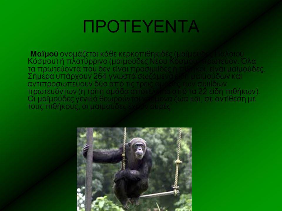 ΠΡΟΤΕΥΕΝΤΑ Μαϊμού ονομάζεται κάθε κερκοπιθηκιδές (μαϊμούδες Παλαιού Κόσμου) ή πλατύρρινο (μαϊμούδες Νέου Κόσμου) πρωτεύον. Όλα τα πρωτεύοντα που δεν ε