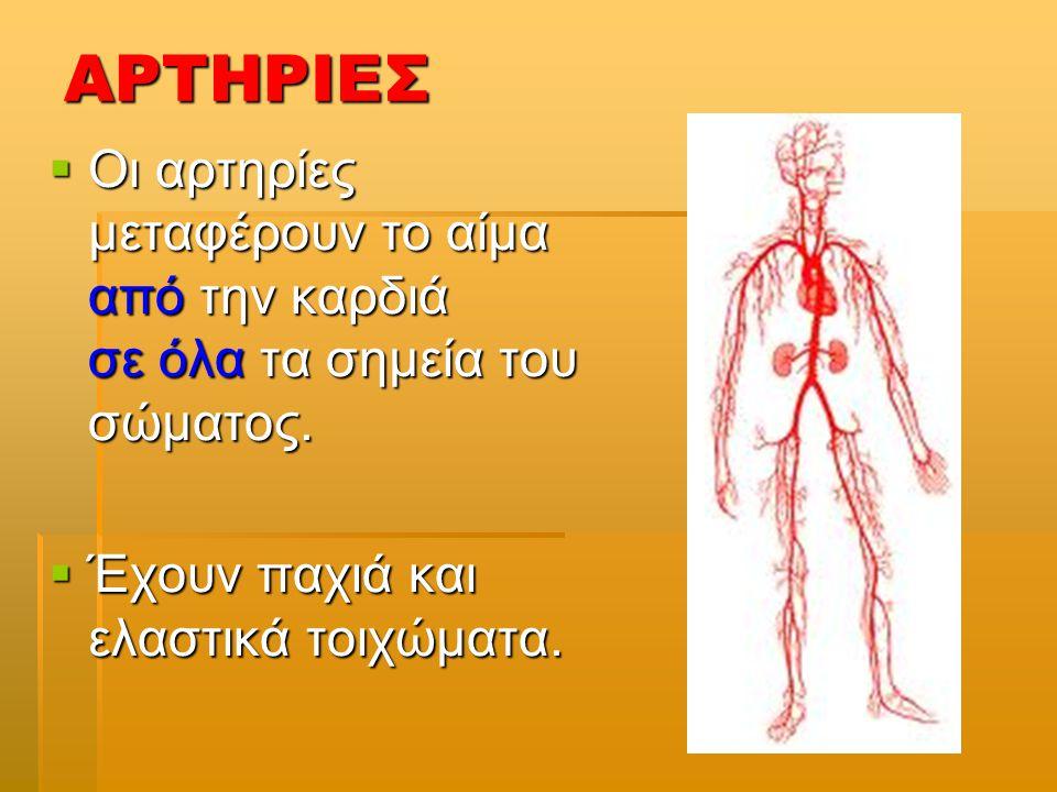 ΑΡΤΗΡΙΕΣ  Οι αρτηρίες μεταφέρουν το αίμα από την καρδιά σε όλα τα σημεία του σώματος.  Έχουν παχιά και ελαστικά τοιχώματα.