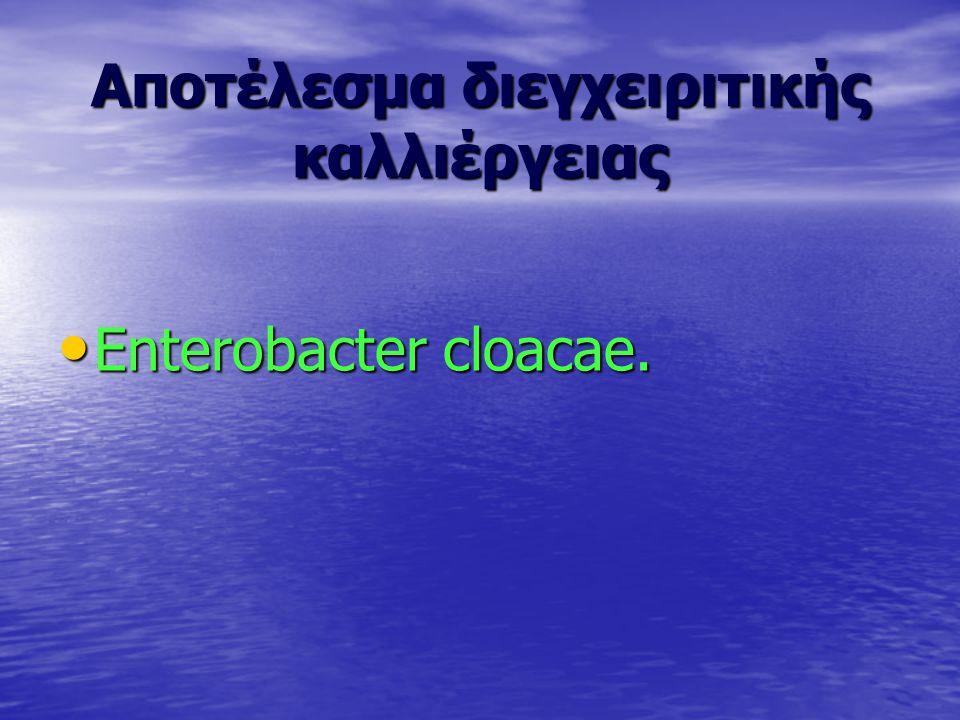Αποτέλεσμα διεγχειριτικής καλλιέργειας Enterobacter cloacae. Enterobacter cloacae.