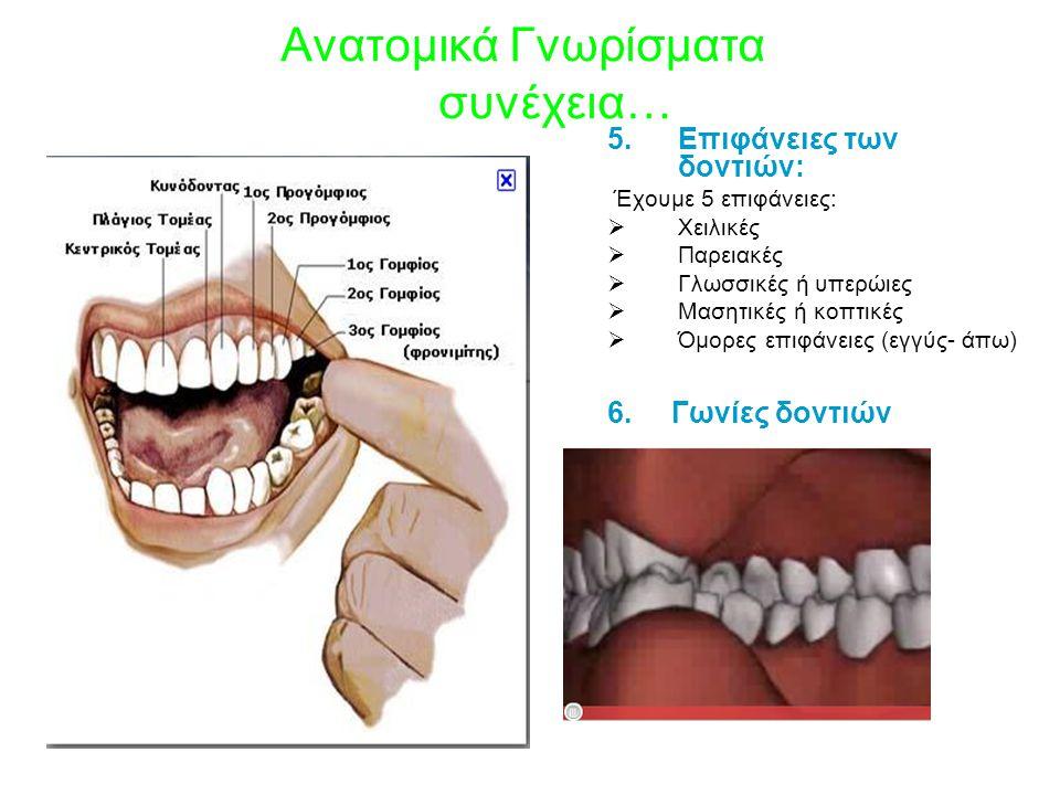 Ανατομικά Γνωρίσματα συνέχεια… 5.Επιφάνειες των δοντιών: Έχουμε 5 επιφάνειες:  Χειλικές  Παρειακές  Γλωσσικές ή υπερώιες  Μασητικές ή κοπτικές  Όμορες επιφάνειες (εγγύς- άπω) 6.