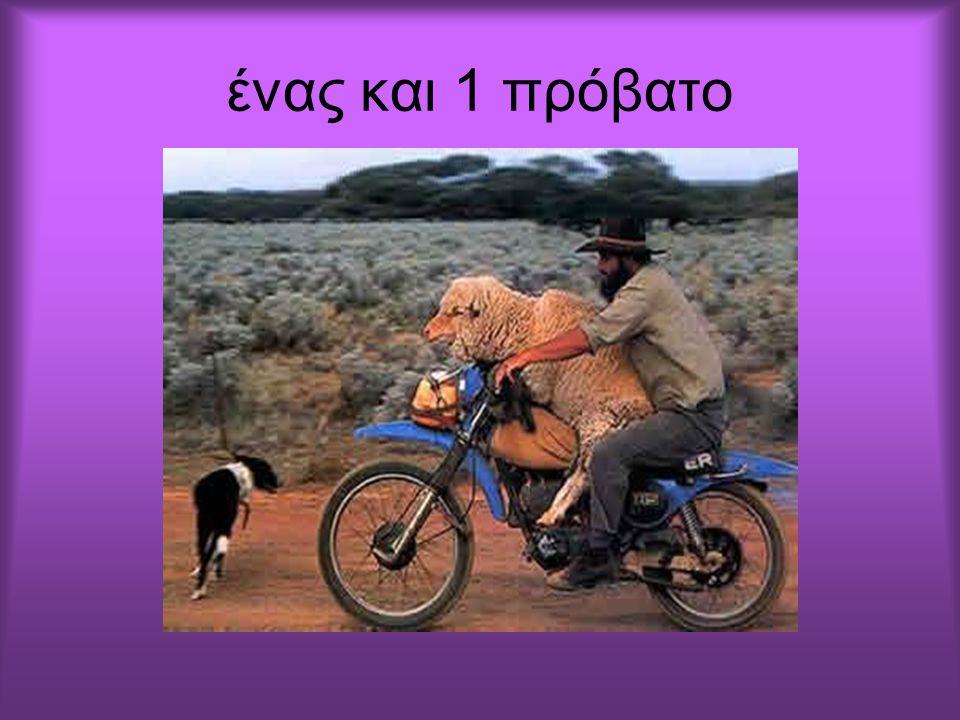ένας και 2 σκύλοι
