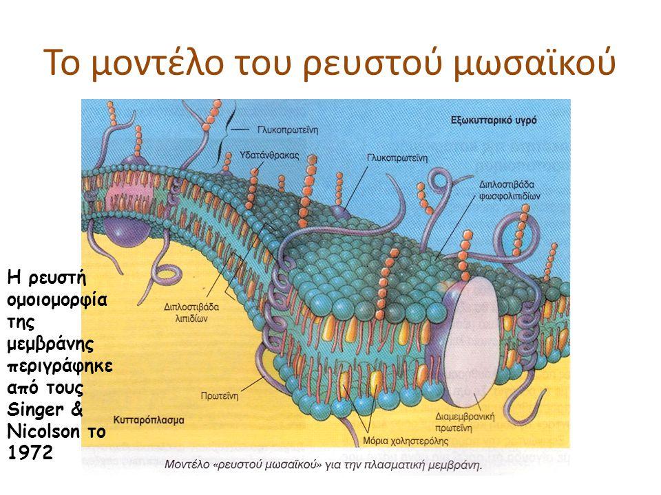 Το μοντέλο του ρευστού μωσαϊκού Η ρευστή ομοιομορφία της μεμβράνης περιγράφηκε από τους Singer & Nicolson το 1972