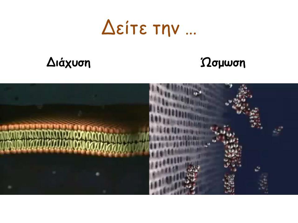 Μεταφορά ιόντων από περιοχές υψηλής συγκέντρωσης σε περιοχές χαμηλής συγκέντρωσης Ενεργητική μεταφορά Μεταφορά ιόντων – Αντλία Κ + - Νa + Η αντλία Κ + - Νa + είναι απαραίτητη για τη λειτουργία των νευρικών κυττάρων και τη μετάδοση των νευρικών σημάτων.