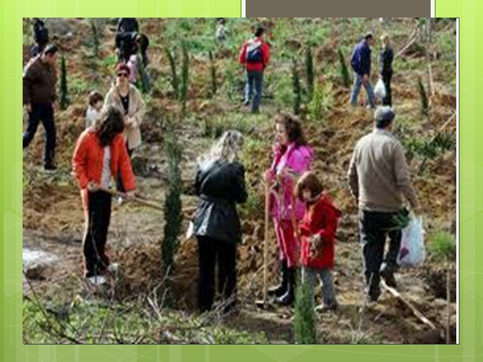  Αγαπώ όλα τα δέντρα  που'χουμε μεσ'την αυλή  Έμαθα να τα φροντίζω  Και είναι φίλοι μου καλοί!