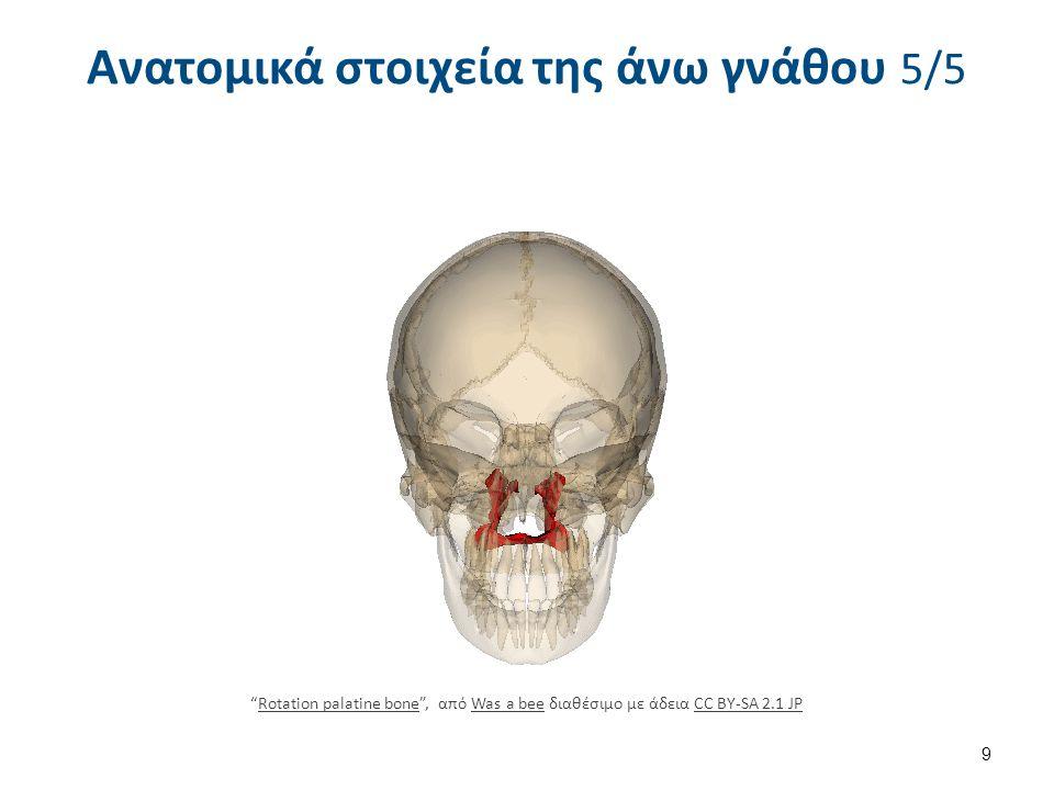 """Ανατομικά στοιχεία της άνω γνάθου 5/5 9 """"Rotation palatine bone"""", από Was a bee διαθέσιμο με άδεια CC BY-SA 2.1 JPRotation palatine boneWas a beeCC BY"""