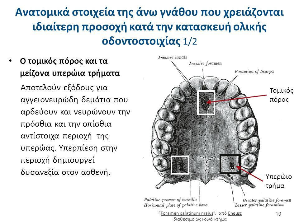 Ο τομικός πόρος και τα μείζονα υπερώια τρήματα Αποτελούν εξόδους για αγγειονευρώδη δεμάτια που αρδεύουν και νευρώνουν την πρόσθια και την οπίσθια αντί