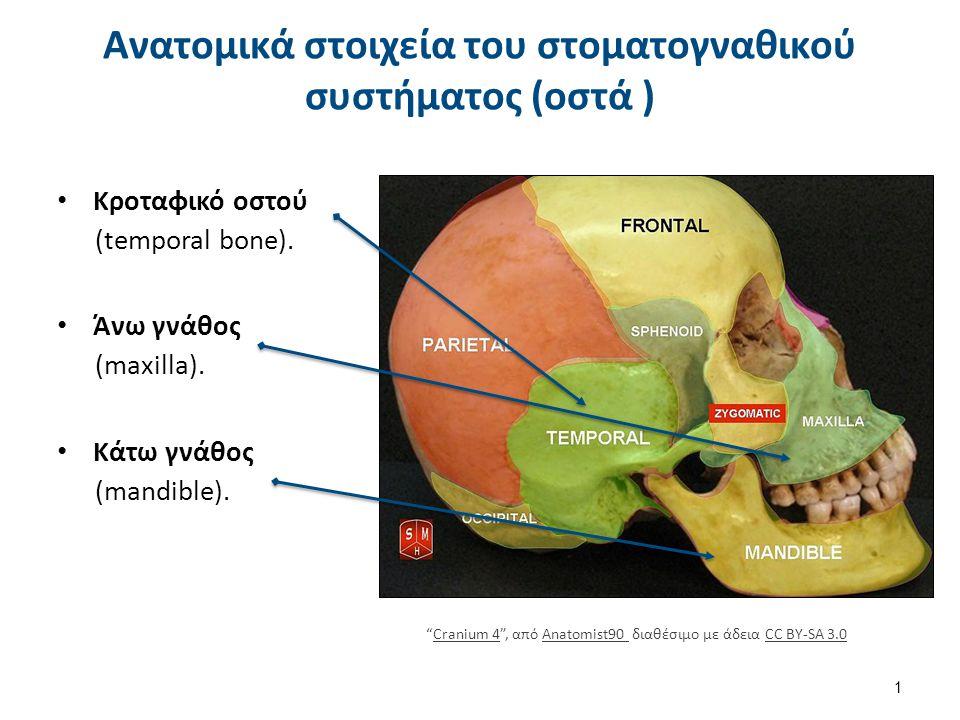"""Κροταφικό οστού (temporal bone). Άνω γνάθος (maxilla). Κάτω γνάθος (mandible). Ανατομικά στοιχεία του στοματογναθικού συστήματος (οστά ) 1 """"Cranium 4"""""""