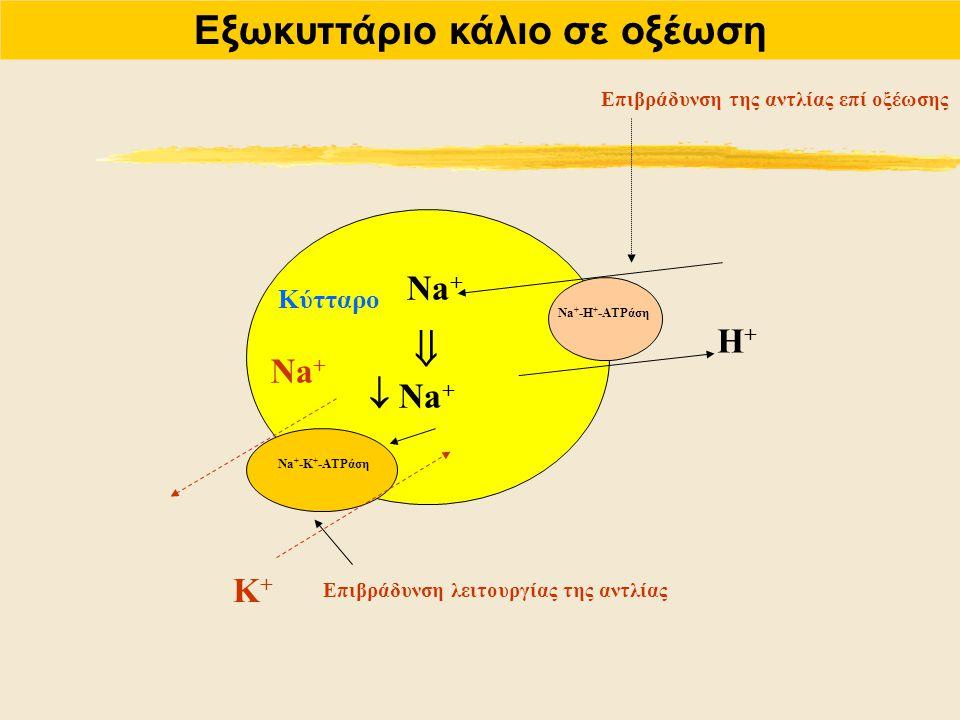 Εξωκυττάριο κάλιο σε οξέωση Na + Η+Η+ Na + -Η + -ATPάση Επιβράδυνση της αντλίας επί οξέωσης   Na + Na + -Κ + -ATPάση Na + Κ+Κ+ Κύτταρο Επιβράδυνση λ