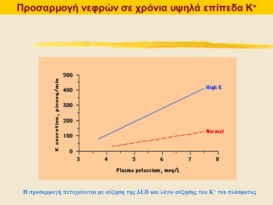 Προσαρμογή νεφρών σε χρόνια υψηλά επίπεδα Κ + Η προσαρμογή πετυχαίνεται με αύξηση της ALD και λόγω αύξησης του Κ + του πλάσματος