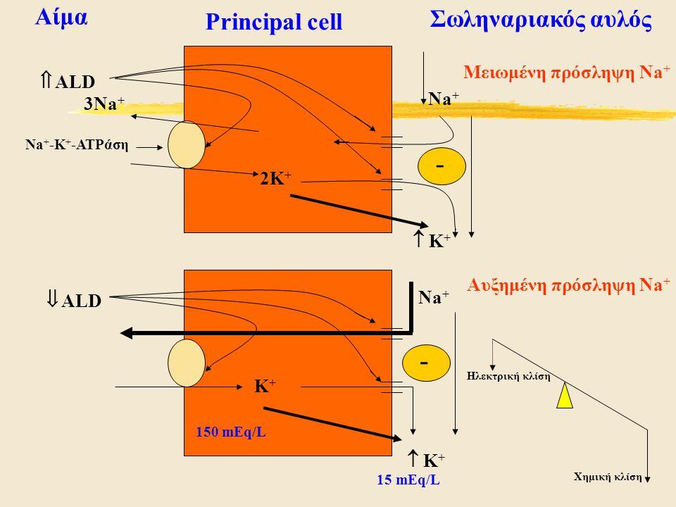 Principal cell Αίμα Σωληναριακός αυλός Αυξημένη πρόσληψη Na + Μειωμένη πρόσληψη Na +  ALD  ALD Na + 2K + Na + K+K+  K+ K+  K+ K+ - - 150 mEq/L 1