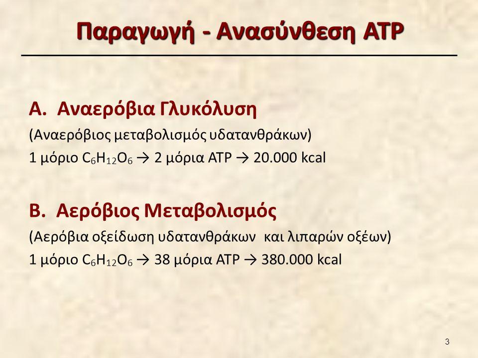 Παραγωγή - Ανασύνθεση ATP Α. Αναερόβια Γλυκόλυση (Αναερόβιος μεταβολισμός υδατανθράκων) 1 μόριο C 6 H 12 O 6 → 2 μόρια ΑΤΡ → 20.000 kcal Β. Αερόβιος Μ