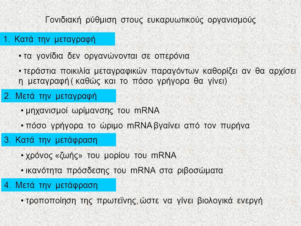 Γονιδιακή ρύθμιση στους προκαρυωτικούς Η περίπτωση της λακτόζης: λακτόζη γλυκόζη + γαλακτόζη ένζυμα ένζυμο 1ένζυμο 2ένζυμο 3 Ρυθμιστικό γονίδιο υποκινητήςχειριστής οπερόνιο λακτόζης ΖΑΥ