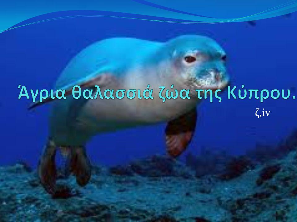 Tursiops truncatus Βιότοποι : θάλασσα και παράλια. Μέγεθος ενήλικα : περίπου 3,60 μέτρα.