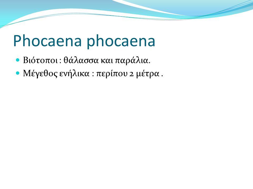 Phocaena phocaena Βιότοποι : θάλασσα και παράλια. Μέγεθος ενήλικα : περίπου 2 μέτρα.