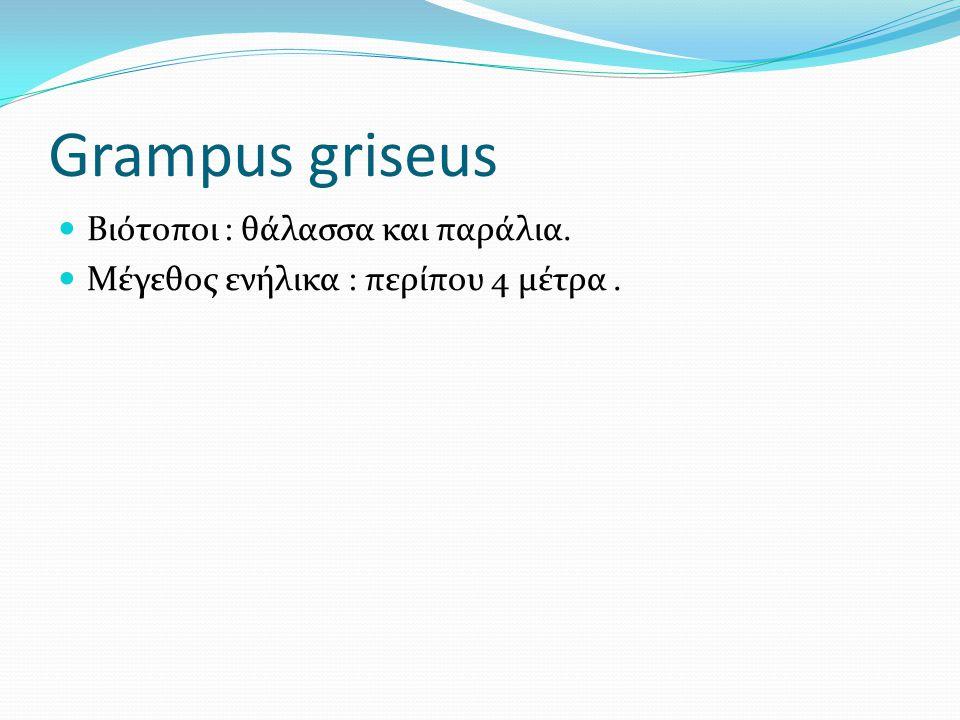Grampus griseus Βιότοποι : θάλασσα και παράλια. Μέγεθος ενήλικα : περίπου 4 μέτρα.