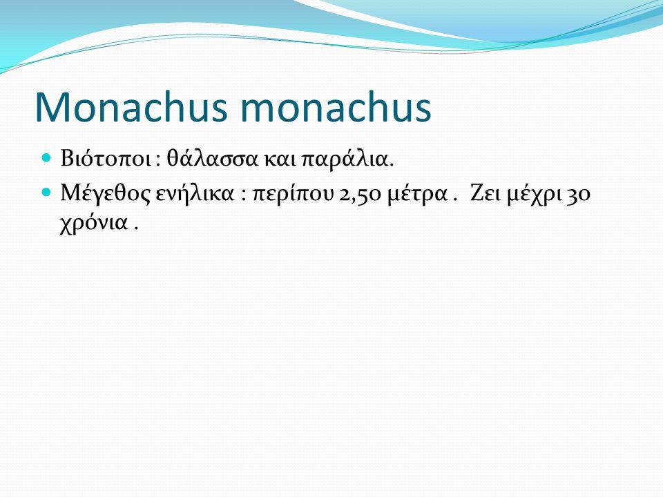 Monachus monachus Βιότοποι : θάλασσα και παράλια. Μέγεθος ενήλικα : περίπου 2,50 μέτρα. Ζει μέχρι 30 χρόνια.