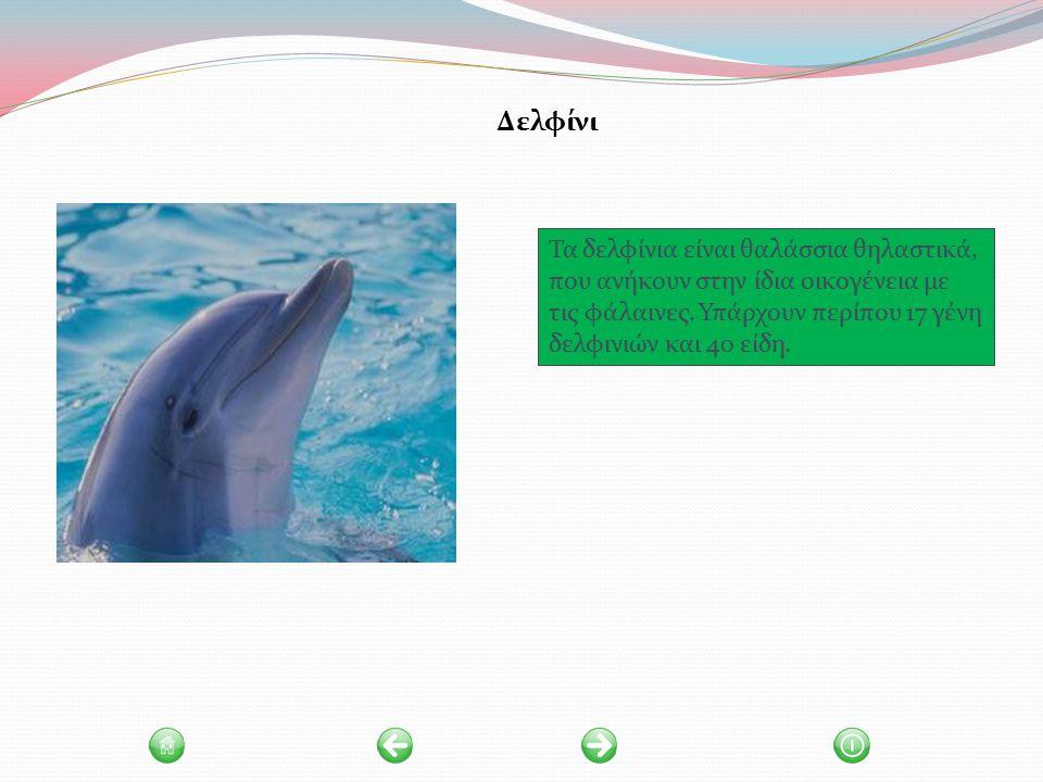 Τα δελφίνια είναι θαλάσσια θηλαστικά, που ανήκουν στην ίδια οικογένεια με τις φάλαινες.